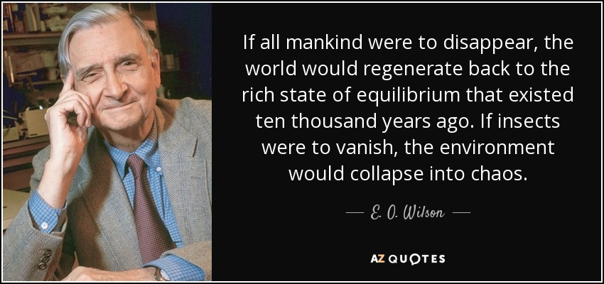 If all mankind were to disappear, the world would regenerate back to the rich state of equilibrium that existed ten thousand years ago. If insects were to vanish, the environment would collapse into chaos. - E. O. Wilson