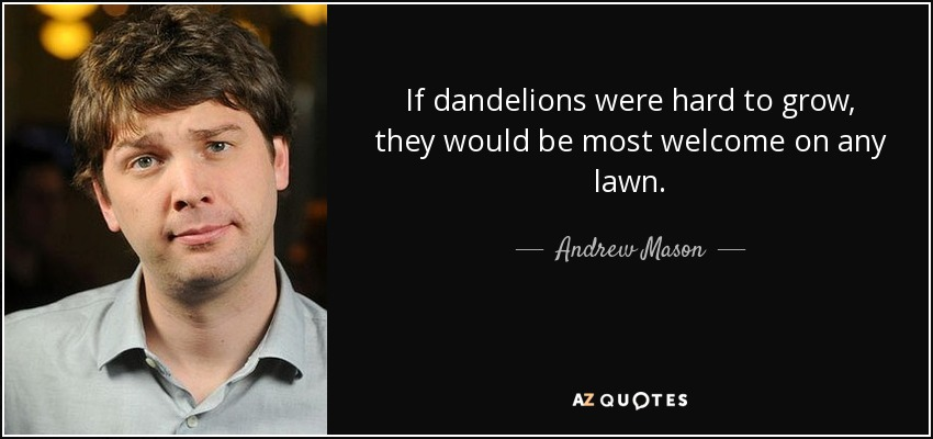 If dandelions were hard to grow, they would be most welcome on any lawn. - Andrew Mason