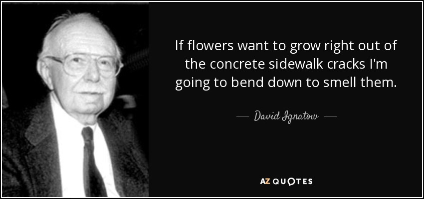 If flowers want to grow right out of the concrete sidewalk cracks I'm going to bend down to smell them. - David Ignatow