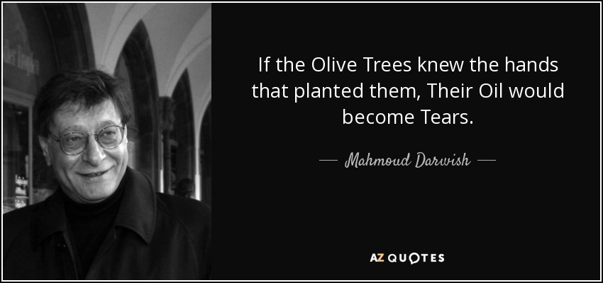 If the Olive Trees knew the hands that planted them, Their Oil would become Tears. - Mahmoud Darwish