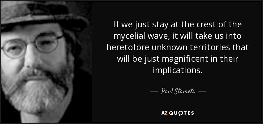 If we just stay at the crest of the mycelial wave, it will take us into heretofore unknown territories that will be just magnificent in their implications. - Paul Stamets