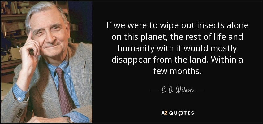 If we were to wipe out insects alone on this planet, the rest of life and humanity with it would mostly disappear from the land. Within a few months. - E. O. Wilson