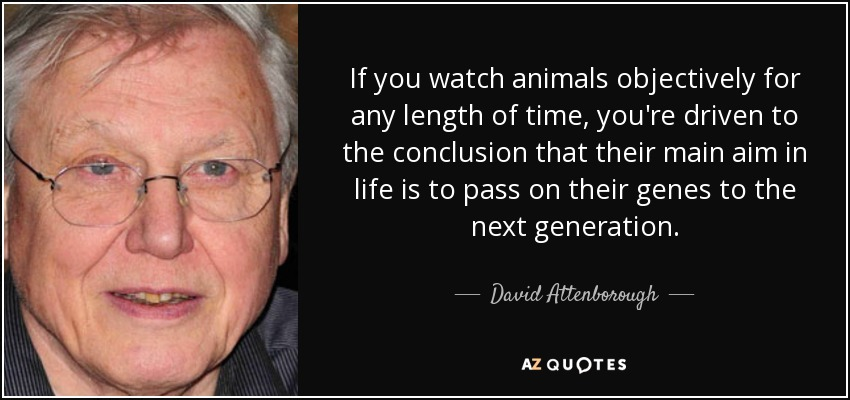 If you watch animals objectively for any length of time, you're driven to the conclusion that their main aim in life is to pass on their genes to the next generation. - David Attenborough
