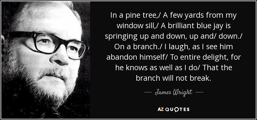 In a pine tree,/ A few yards from my window sill,/ A brilliant blue jay is springing up and down, up and/ down./ On a branch./ I laugh, as I see him abandon himself/ To entire delight, for he knows as well as I do/ That the branch will not break. - James Wright