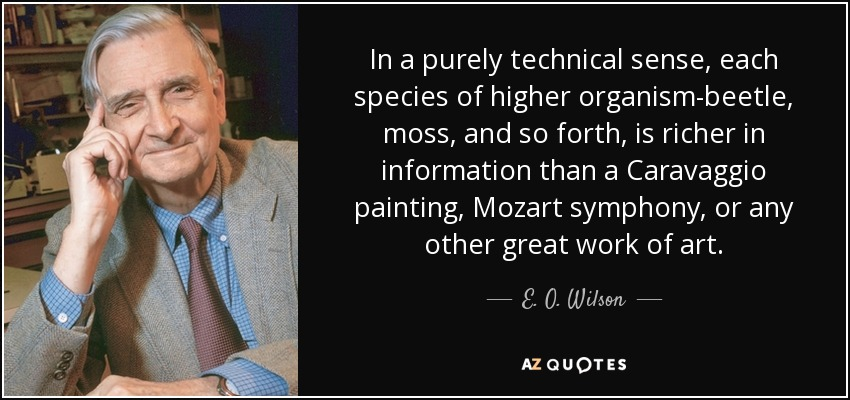In a purely technical sense, each species of higher organism-beetle, moss, and so forth, is richer in information than a Caravaggio painting, Mozart symphony, or any other great work of art. - E. O. Wilson