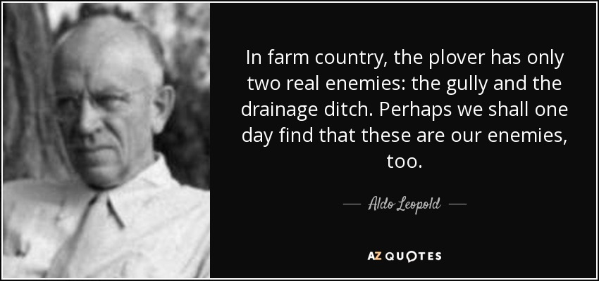 In farm country, the plover has only two real enemies: the gully and the drainage ditch. Perhaps we shall one day find that these are our enemies, too. - Aldo Leopold