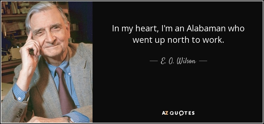 In my heart, I'm an Alabaman who went up north to work. - E. O. Wilson