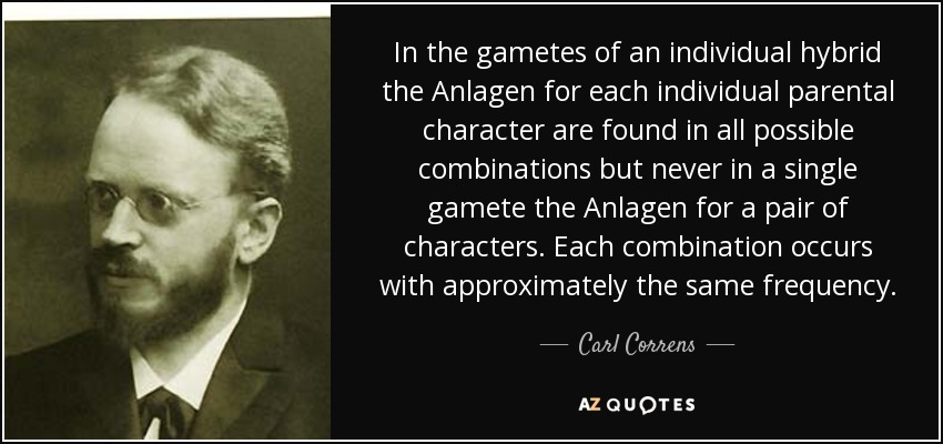 In the gametes of an individual hybrid the Anlagen for each individual parental character are found in all possible combinations but never in a single gamete the Anlagen for a pair of characters. Each combination occurs with approximately the same frequency. - Carl Correns