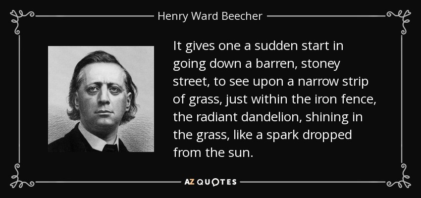 It gives one a sudden start in going down a barren, stoney street, to see upon a narrow strip of grass, just within the iron fence, the radiant dandelion, shining in the grass, like a spark dropped from the sun. - Henry Ward Beecher