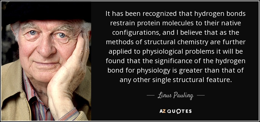 It has been recognized that hydrogen bonds restrain protein molecules to their native configurations, and I believe that as the methods of structural chemistry are further applied to physiological problems it will be found that the significance of the hydrogen bond for physiology is greater than that of any other single structural feature. - Linus Pauling