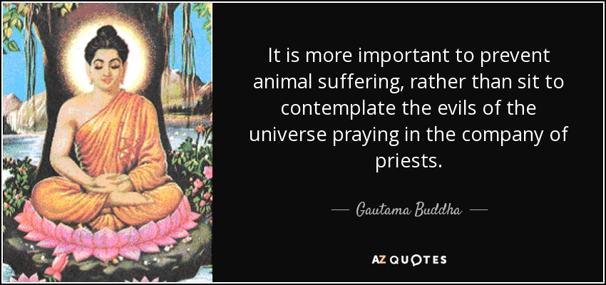 It is more important to prevent animal suffering, rather than sit to contemplate the evils of the universe praying in the company of priests. - Gautama Buddha