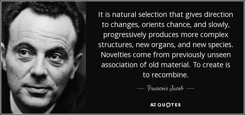It is natural selection that gives direction to changes, orients chance, and slowly, progressively produces more complex structures, new organs, and new species. Novelties come from previously unseen association of old material. To create is to recombine. - Francois Jacob