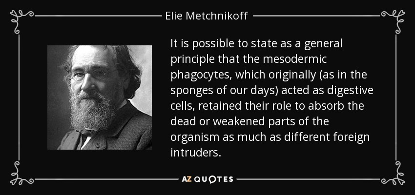 It is possible to state as a general principle that the mesodermic phagocytes, which originally (as in the sponges of our days) acted as digestive cells, retained their role to absorb the dead or weakened parts of the organism as much as different foreign intruders. - Elie Metchnikoff