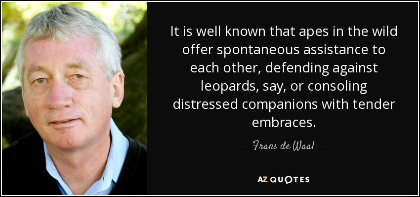 It is well known that apes in the wild offer spontaneous assistance to each other, defending against leopards, say, or consoling distressed companions with tender embraces. - Frans de Waal