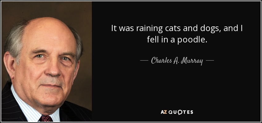 It was raining cats and dogs, and I fell in a poodle. - Charles A. Murray