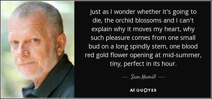 Just as I wonder whether it's going to die, the orchid blossoms and I can't explain why it moves my heart, why such pleasure comes from one small bud on a long spindly stem, one blood red gold flower opening at mid-summer, tiny, perfect in its hour. - Sam Hamill