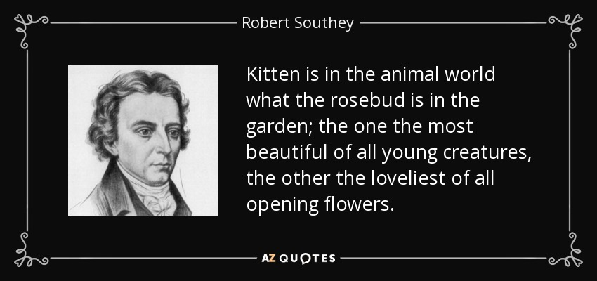 Kitten is in the animal world what the rosebud is in the garden; the one the most beautiful of all young creatures, the other the loveliest of all opening flowers. - Robert Southey