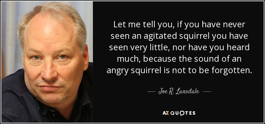 Let me tell you, if you have never seen an agitated squirrel you have seen very little, nor have you heard much, because the sound of an angry squirrel is not to be forgotten. - Joe R. Lansdale
