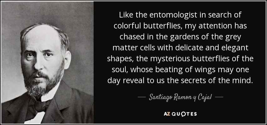 Like the entomologist in search of colorful butterflies, my attention has chased in the gardens of the grey matter cells with delicate and elegant shapes, the mysterious butterflies of the soul, whose beating of wings may one day reveal to us the secrets of the mind. - Santiago Ramon y Cajal