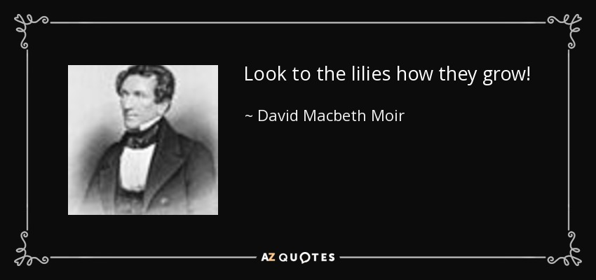 Look to the lilies how they grow! - David Macbeth Moir
