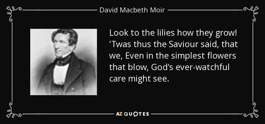 Look to the lilies how they grow! 'Twas thus the Saviour said, that we, Even in the simplest flowers that blow, God's ever-watchful care might see. - David Macbeth Moir