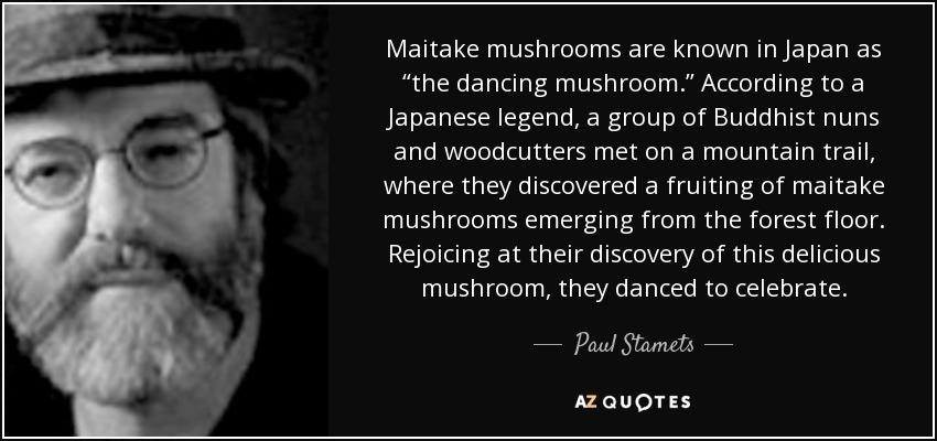 """Maitake mushrooms are known in Japan as """"the dancing mushroom."""" According to a Japanese legend, a group of Buddhist nuns and woodcutters met on a mountain trail, where they discovered a fruiting of maitake mushrooms emerging from the forest floor. Rejoicing at their discovery of this delicious mushroom, they danced to celebrate. - Paul Stamets"""
