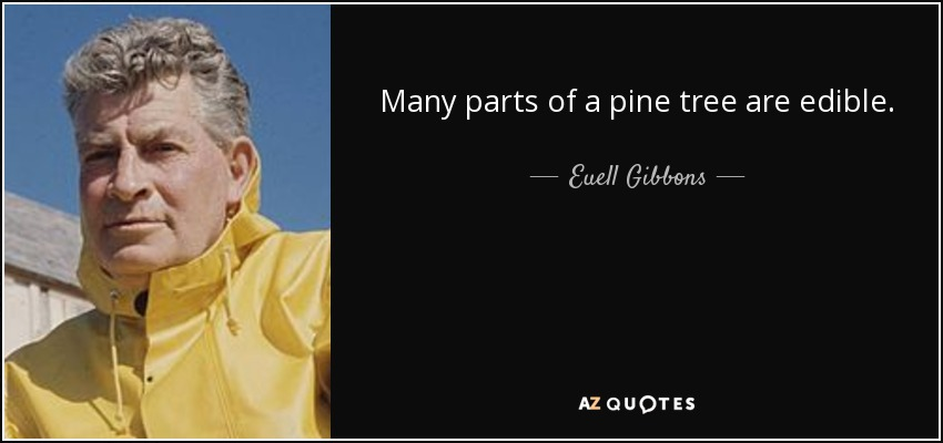 Many parts of a pine tree are edible. - Euell Gibbons
