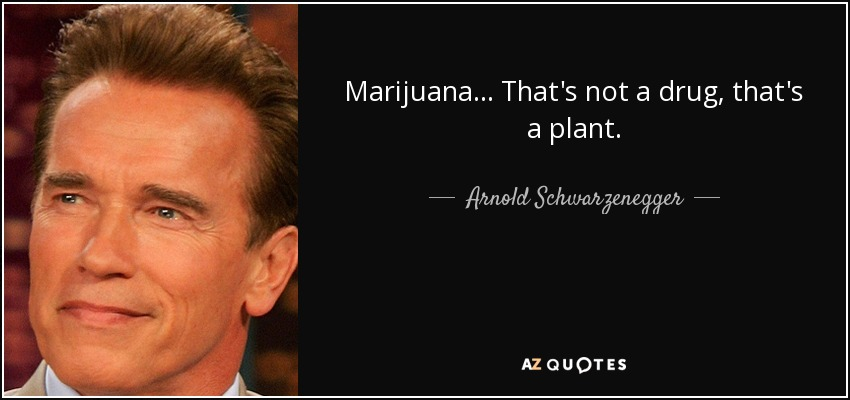 Marijuana... That's not a drug, that's a plant. - Arnold Schwarzenegger