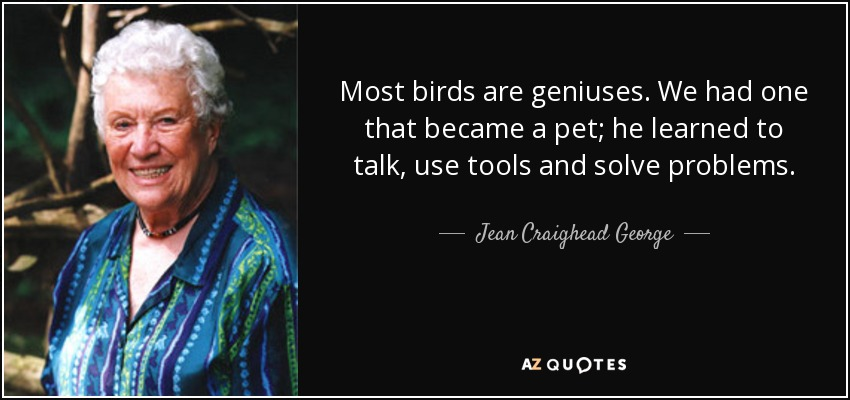 Most birds are geniuses. We had one that became a pet; he learned to talk, use tools and solve problems. - Jean Craighead George
