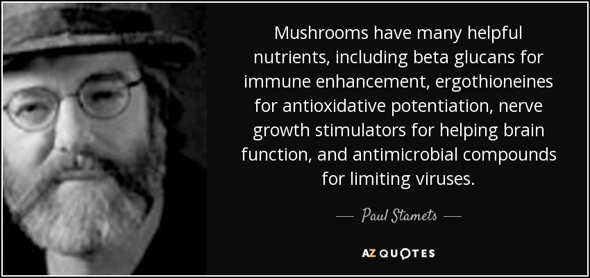Mushrooms have many helpful nutrients, including beta glucans for immune enhancement, ergothioneines for antioxidative potentiation, nerve growth stimulators for helping brain function, and antimicrobial compounds for limiting viruses. - Paul Stamets
