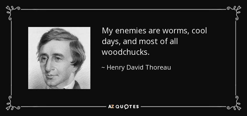 My enemies are worms, cool days, and most of all woodchucks. - Henry David Thoreau