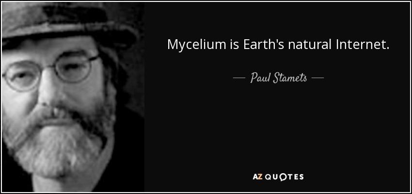 Mycelium is Earth's natural Internet. - Paul Stamets