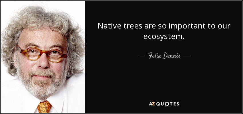 Native trees are so important to our ecosystem. - Felix Dennis