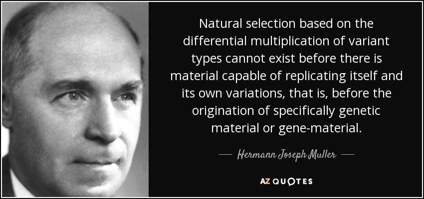 Natural selection based on the differential multiplication of variant types cannot exist before there is material capable of replicating itself and its own variations, that is, before the origination of specifically genetic material or gene-material. - Hermann Joseph Muller