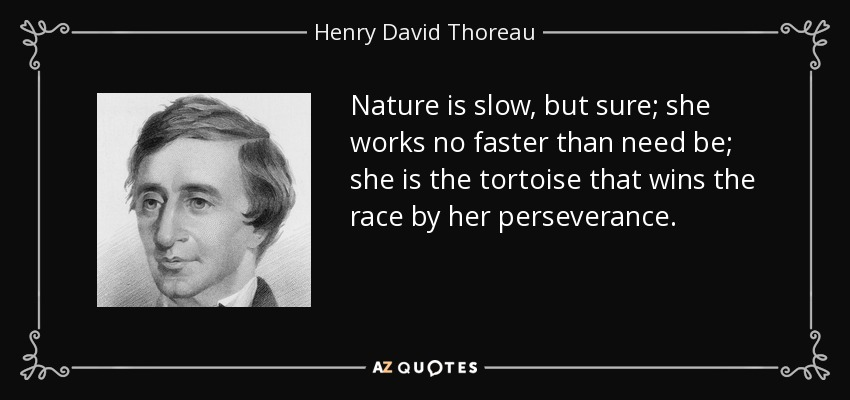 Nature is slow, but sure; she works no faster than need be; she is the tortoise that wins the race by her perseverance. - Henry David Thoreau