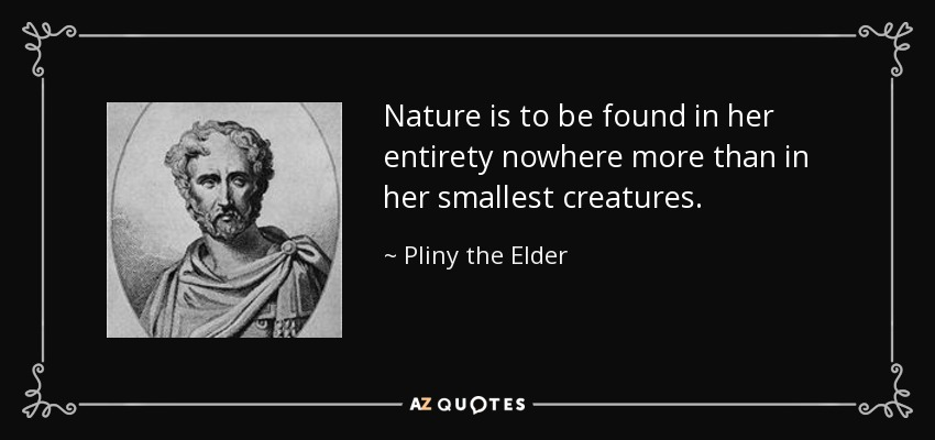 Nature is to be found in her entirety nowhere more than in her smallest creatures. - Pliny the Elder