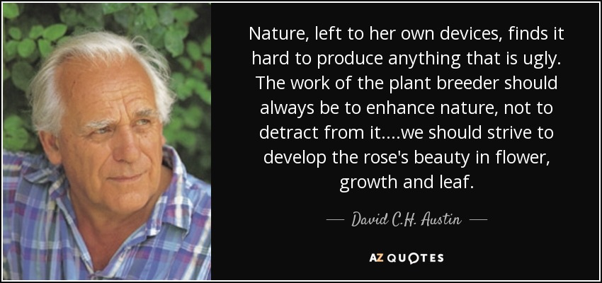 Nature, left to her own devices, finds it hard to produce anything that is ugly. The work of the plant breeder should always be to enhance nature, not to detract from it....we should strive to develop the rose's beauty in flower, growth and leaf. - David C.H. Austin