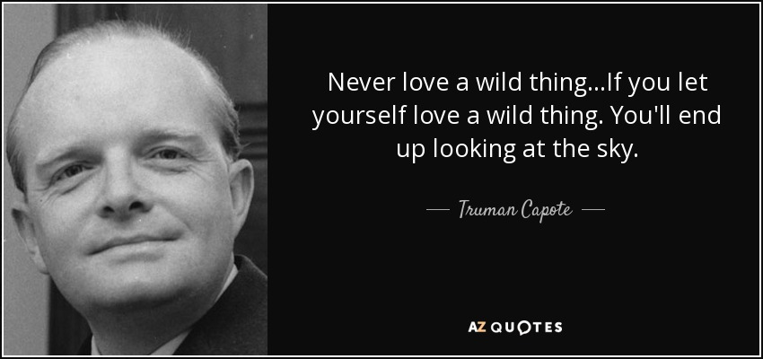 Never love a wild thing...If you let yourself love a wild thing. You'll end up looking at the sky. - Truman Capote