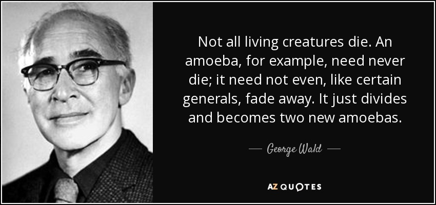 Not all living creatures die. An amoeba, for example, need never die; it need not even, like certain generals, fade away. It just divides and becomes two new amoebas. - George Wald