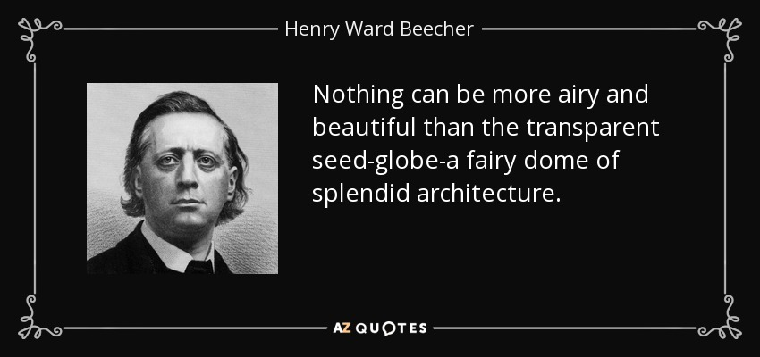 Nothing can be more airy and beautiful than the transparent seed-globe-a fairy dome of splendid architecture. - Henry Ward Beecher