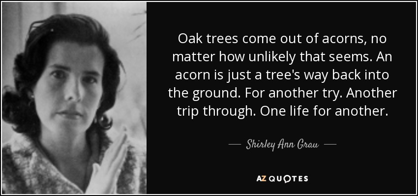 Oak trees come out of acorns, no matter how unlikely that seems. An acorn is just a tree's way back into the ground. For another try. Another trip through. One life for another. - Shirley Ann Grau