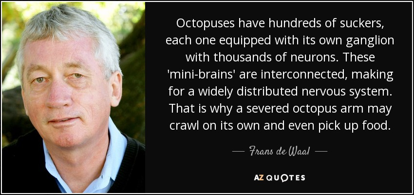 Octopuses have hundreds of suckers, each one equipped with its own ganglion with thousands of neurons. These 'mini-brains' are interconnected, making for a widely distributed nervous system. That is why a severed octopus arm may crawl on its own and even pick up food. - Frans de Waal