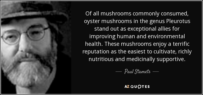 Of all mushrooms commonly consumed, oyster mushrooms in the genus Pleurotus stand out as exceptional allies for improving human and environmental health. These mushrooms enjoy a terrific reputation as the easiest to cultivate, richly nutritious and medicinally supportive. - Paul Stamets