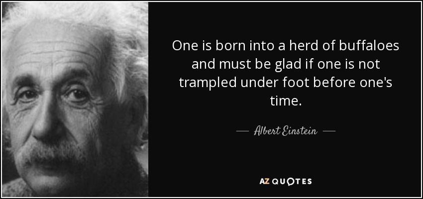 One is born into a herd of buffaloes and must be glad if one is not trampled under foot before one's time. - Albert Einstein