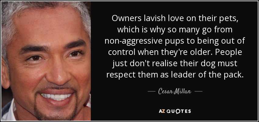 Owners lavish love on their pets, which is why so many go from non-aggressive pups to being out of control when they're older. People just don't realise their dog must respect them as leader of the pack. - Cesar Millan