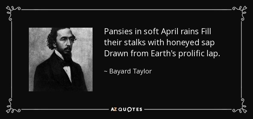 Pansies in soft April rains Fill their stalks with honeyed sap Drawn from Earth's prolific lap. - Bayard Taylor