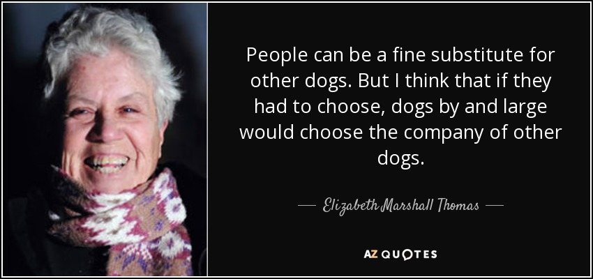 People can be a fine substitute for other dogs. But I think that if they had to choose, dogs by and large would choose the company of other dogs. - Elizabeth Marshall Thomas