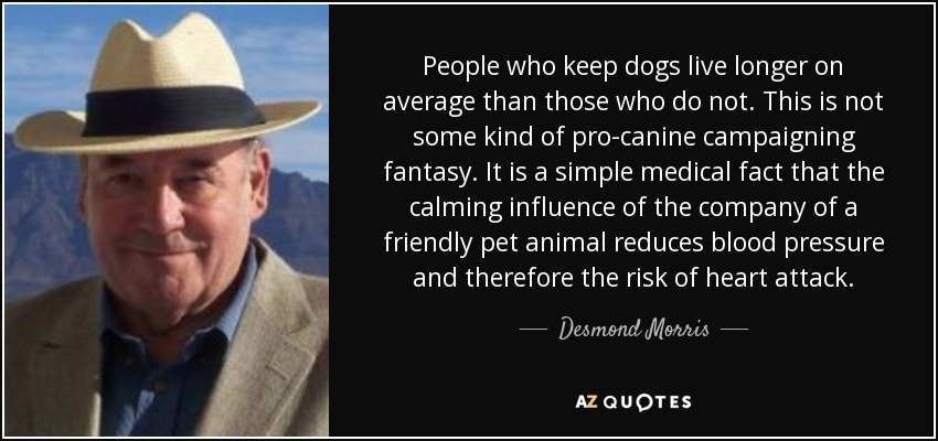 People who keep dogs live longer on average than those who do not. This is not some kind of pro-canine campaigning fantasy. It is a simple medical fact that the calming influence of the company of a friendly pet animal reduces blood pressure and therefore the risk of heart attack. - Desmond Morris