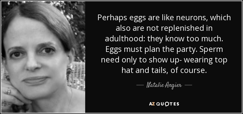 Perhaps eggs are like neurons, which also are not replenished in adulthood: they know too much. Eggs must plan the party. Sperm need only to show up- wearing top hat and tails, of course. - Natalie Angier