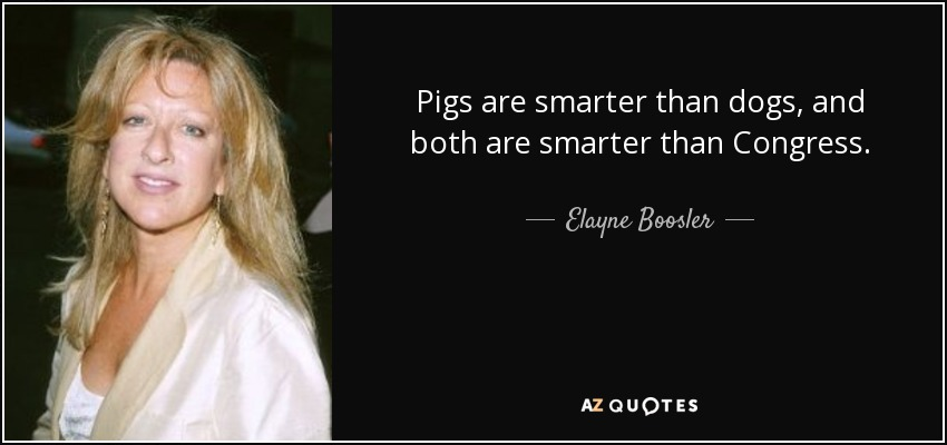 Pigs are smarter than dogs, and both are smarter than Congress. - Elayne Boosler